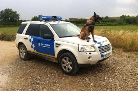 Malgrat de Mar reune a perros policía de toda España