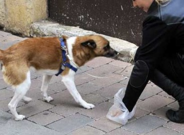 Tordera pondrá en marcha un censo de ADN de los perros para identificar a los propietarios incívicos