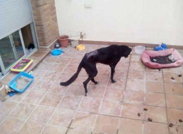 Salvan a seis animales abandonados en un piso de Mataró