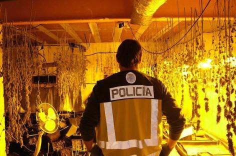 Cuatro detenidos en Tordera por cultivar marihuana en un garaje