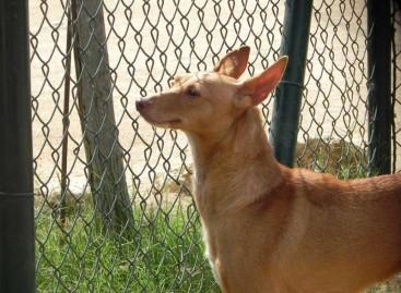 La SPAM  cerrará la perrera de la calle Galicia y concentrará toda su actividad en Cal Pilé