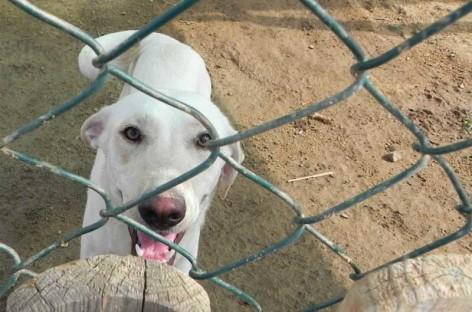 Convocan una manifestación para protestar por el cierre de la perrera de Mataró