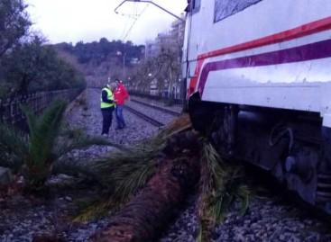 Interrumpida la R1 en Calella al chocar un tren con una palmera derribada por la tormenta