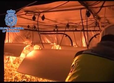 La Policía Nacional desarticula un clan familiar de cultivo de marihuana que operaba en Argentona