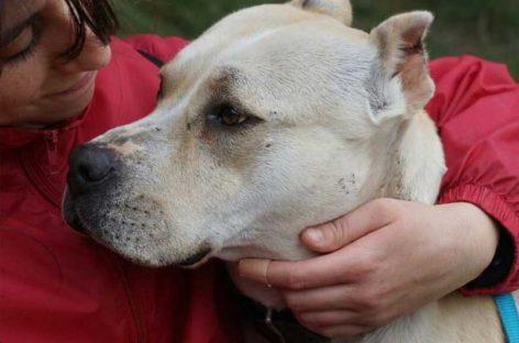 Alertan de la presencia de una banda en el Maresme que roba perros para luchas ilegales