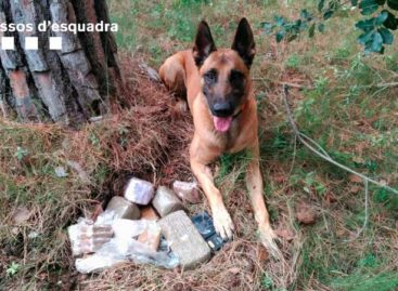 Detenido en Sant Pol un traficante que ocultaba el hachís debajo de un pino