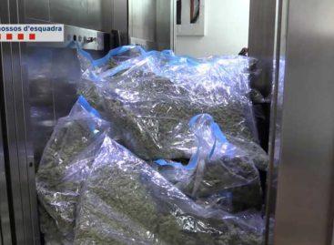 Cae una banda que cultivaba y vendía marihuana a clubes cannábicos