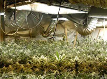 Detenido un italiano por cultivar marihuana en una masía de Argentona