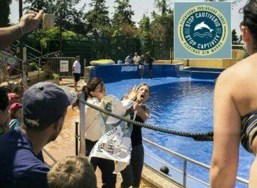 Un grupo animalista interrumpe un espectáculo de delfines en Marineland de Palafolls