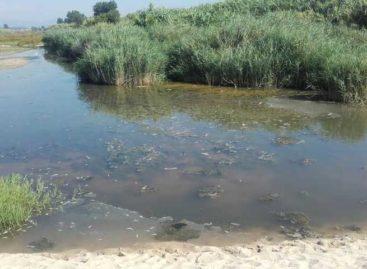 Localizan cientos de peces muertos en el delta del río Tordera