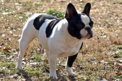 Alertan sobre nuevos casos de robos de perros en el Maresme