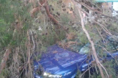 Una rama de un pino se desploma en plena calle en Malgrat dañando a tres coches