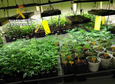 La Guardia Civil detiene a una persona e interviene 1300 plantas de marihuana en  Premià de Dalt