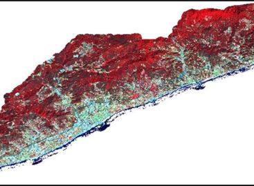 El satélite confirma el avance de las plagas que atacan los pinos del Maresme