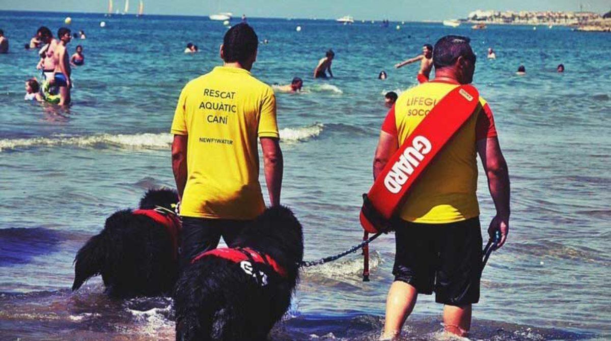 Sant Pol escenario de una prueba piloto de perros como socorristas de playa