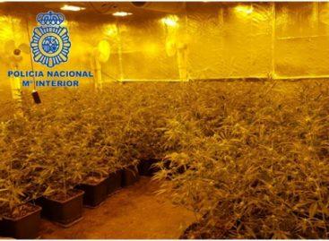 Cae una red de tráfico internacional de marihuana que operaba desde Pineda de Mar y tenía intereses en Calella y Santa Susanna