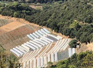 Localizan en Sant Cebrià de Vallalta 50 invernaderos dedicados al cultivo de la marihuana