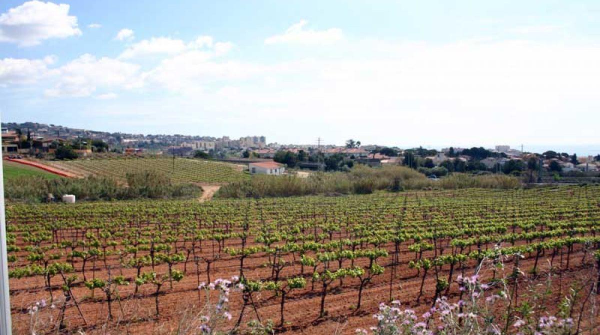 El futuro de la industria española del vino