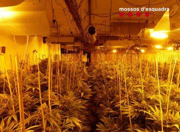 Los Mossos detienen a cinco personas y localizan dos plantaciones de marihuana en Mataró