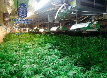La Policía Nacional desmantela dos grandes plantaciones de marihuana en Mataró