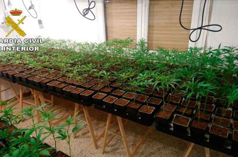 La Guardia Civil detiene a dos vecinos de Dosrius por cultivo ilegal de marihuana